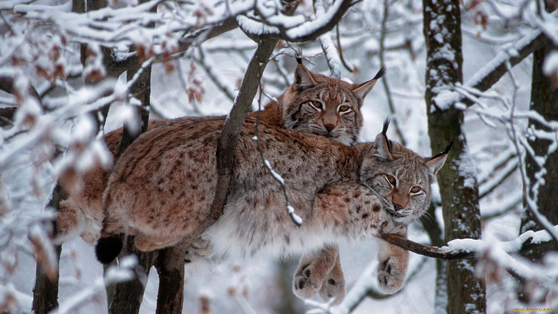 бывают современные картинки зима природа животные фотографе